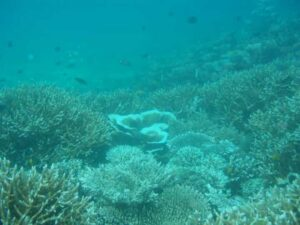 MPA_Marine_Protected_Area-Maloong_Canal_2